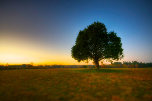 morning autumn tree fall grass sunrise virginia nikon solitude glow va serenity yorktown hdr onone focalpoint d90 phototools sigma1020mmf456exdchsm theromannumeralproject