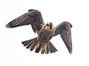Testing Its Wings by Rick Derevan
