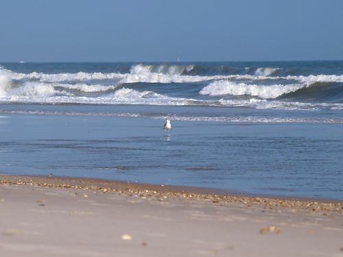 beach water sand waves seagull northcarolina atlanticocean topsailisland sandcrab northtopsailbeach