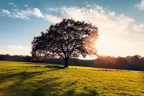 summer sky tree fall nature sunshine canon germany landscape geotagged eos sommer herbst wiese himmel flare 1750 tamron landschaft baum deu gegenlicht rheinlandpfalz sonnenschein eiche westerwald nsg naturschutz 50d tamron1750 canoneos50d elkenroth newphotodistillery kotzenroth geo:lat=5072174833 geo:lon=785481667