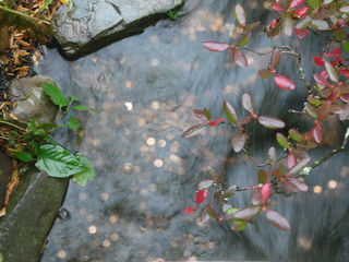 Money under water   by Lisa Anne Paul