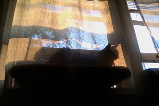 Kitty silhouette | by S_Crews