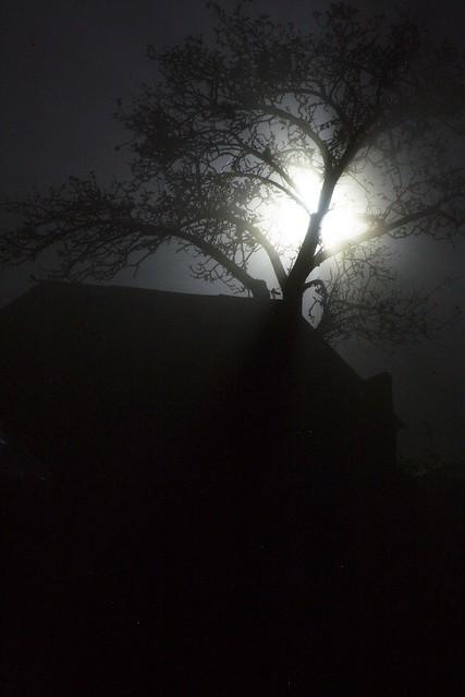 imgp1977 - Fog