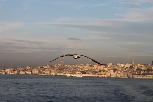The Bosphorus | by Thomas Andersen