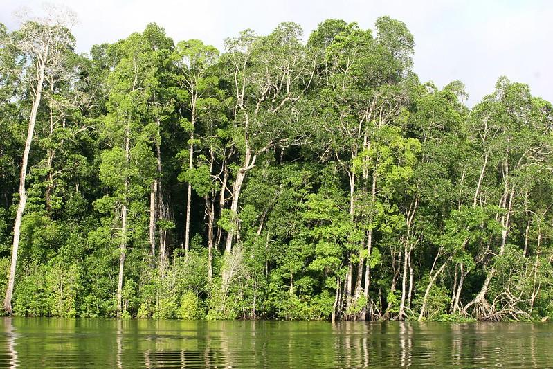 挪威抵制雨林产品 全球首发 – 全球新知
