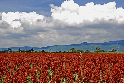 sky paisajes landscapes cielo supershot top20cloud mywinners abigfave colorphotoaward flickrdiamond 100commentgroup octaviobj
