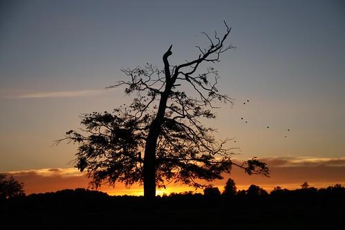 sunset tree birds