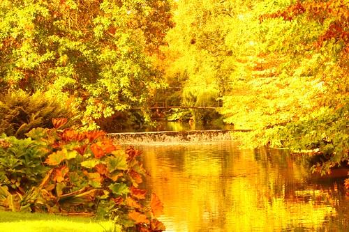 ireland yellow river centurian 400 200 100views 400views 300views 200views 100 500views 300 500 ashford countywicklow mountusher photographedublin moderntwist2 myyellowworld