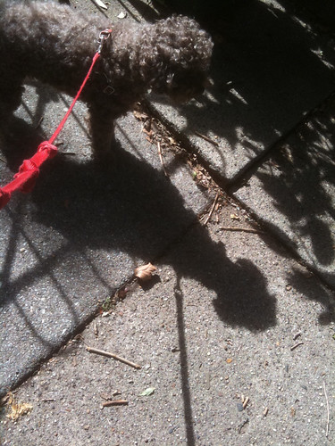 shadows and red leash | by karenchristine552