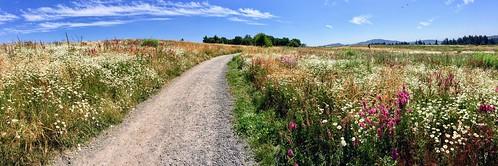 powellbutte portland iphone6 panorama cameraphone oregon pnw hiking landscape grass field sky blue cascademountains nature outdoors pdx flowers