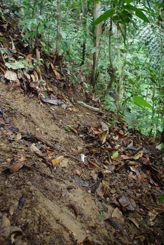 Thu, 04/29/2010 - 09:30 - Clay soil. Credit: Min Sheng Khoo