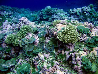 reef3796 | by NOAA Photo Library