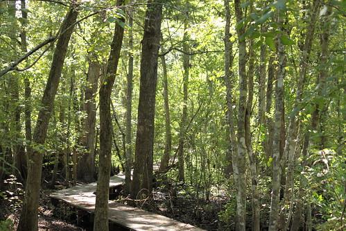 trees forest boardwalk lakefaussepointestateparktrail