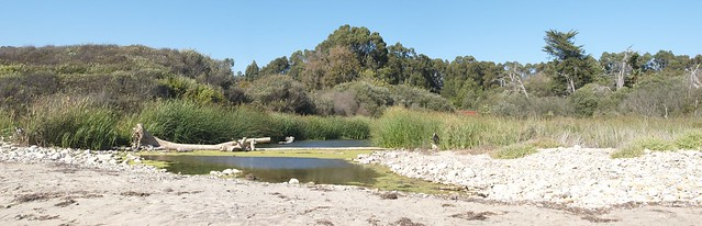 J9226914_7 100922 slough east of Bacara resort Haskell beach Goleta ICE rm stitch
