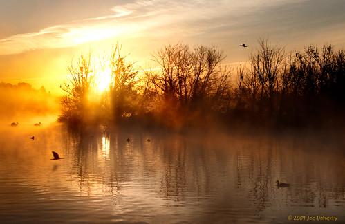 sky lake birds yellow fog sunrise duck losangeles pelican cormorant d90 sepulvedadam yourphototips