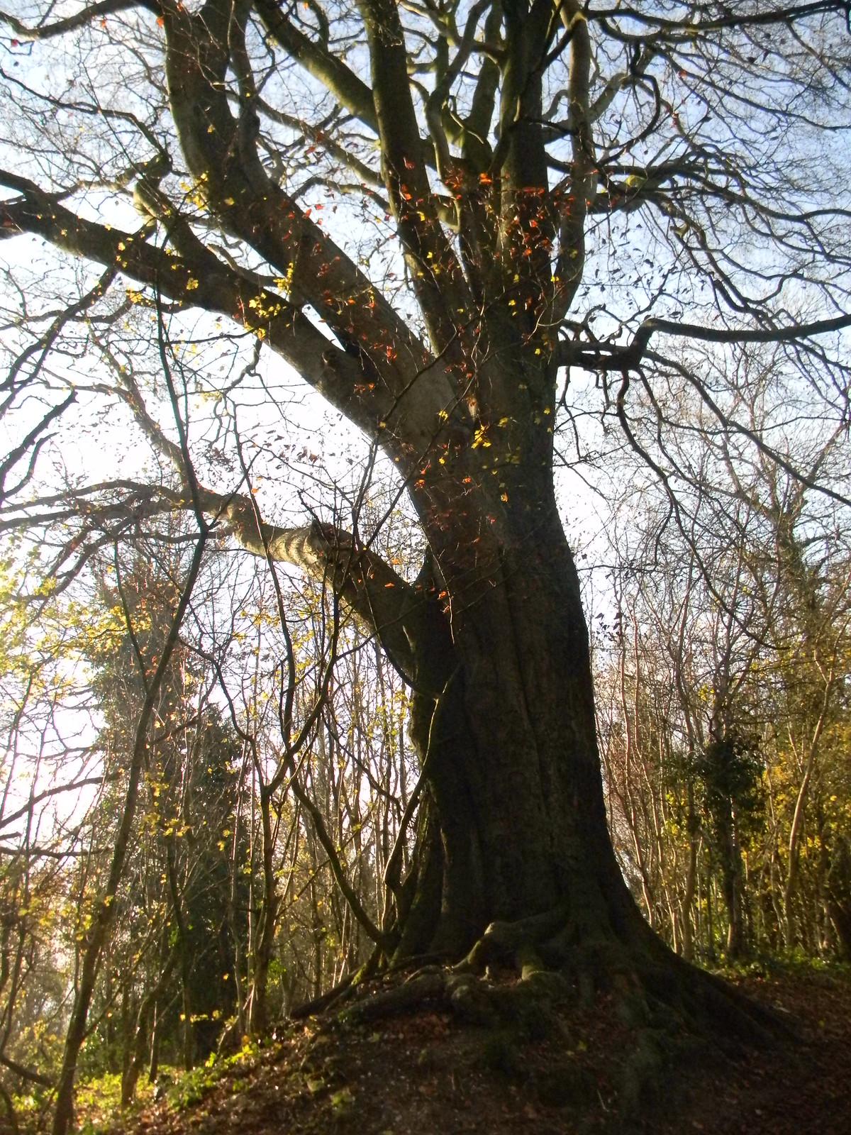 Tree Merstham to Tadworth