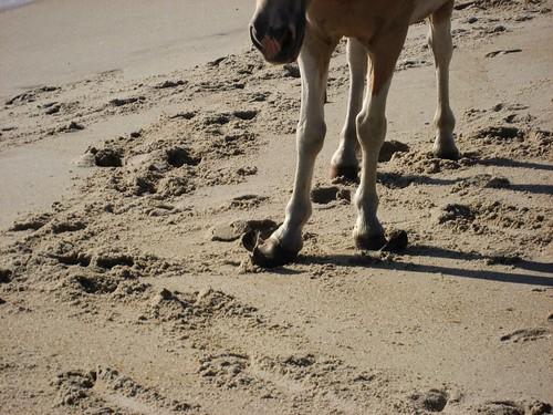 Wild Horses - Assateague Island National Seashore | by Mrs. Gemstone
