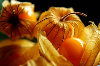 Cape gooseberries | by mr.donb