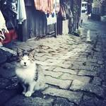 a cat in Safranbolu 2 / サフランボルの猫 2 #iphoneography
