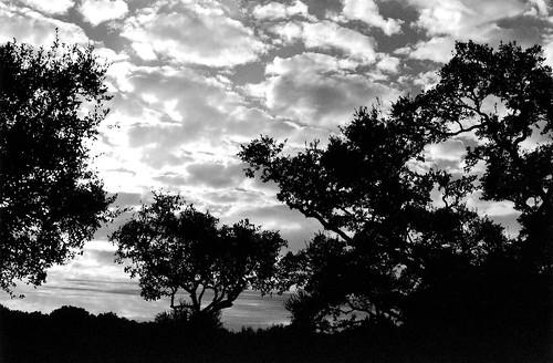 pipecreek texas usa bwfp canonef50mmf14usmlens bwfpro58mm0222xmrcyellowfilter bwfpro58mm010uvhaze1xmrcfilter kodakprofessionalbw400cnfilm epsonperfectionv600photoscanner canon canoneoselan7n blackwhite 35mmfilm clouds trees cloudsstormssunsetssunrises