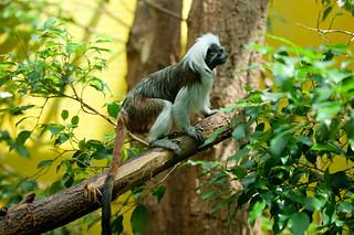 Tierpark Dählhölzli Bern   by mhauri