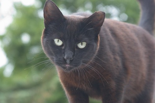 Curious Black Feral Cat by Chriss Pagani