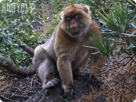 ANIMALS:Ruisseau des Singes a Chiffa-BLIDA-ALGERIE- عنصر القردة في شفة_ - a  photo on Flickriver
