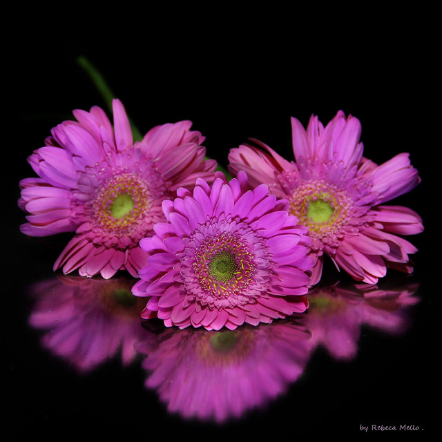 Three flowers ...