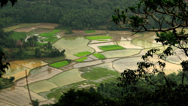 Fields of cultivation