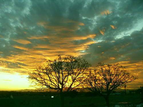 trees sunsets
