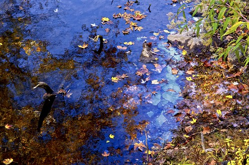 fall nikon autumnleaves westvirginia potomacriver westernmaryland wva stillwaters d300 hancockmaryland 1755nikkor beautifulblues berkeleyspringswestvirginia