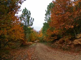 Colores de otoño | by Masqueandar