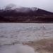 Jezero Chungara a osamělý plameňák, foto: Petr Nejedlý