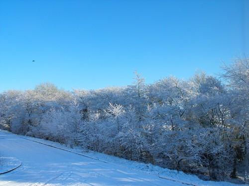 blue trees sky white snow cold alberi soft blu cielo neve bianca azzurro bianco freddo soffice