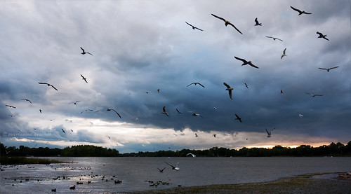 light sunset sea sky panorama lake canada reflection nature water birds clouds river landscape duck gulls flock sparkling shimmer