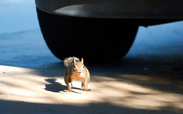 Run-Little-Squirrel-Run