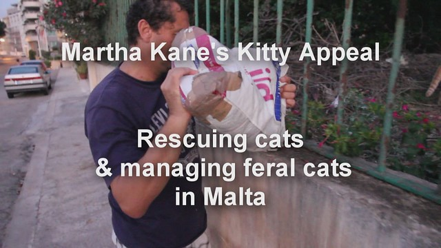 Martha Kane's Kitty Appeal