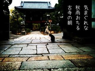 秋雨 Rain in autumn