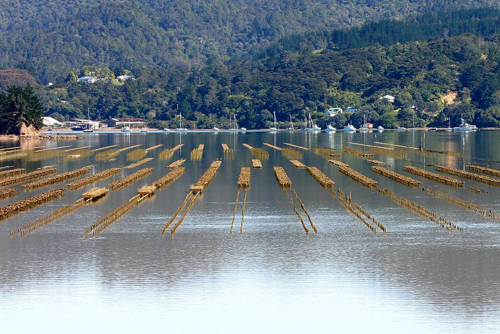 photo of oyster farm new zealand