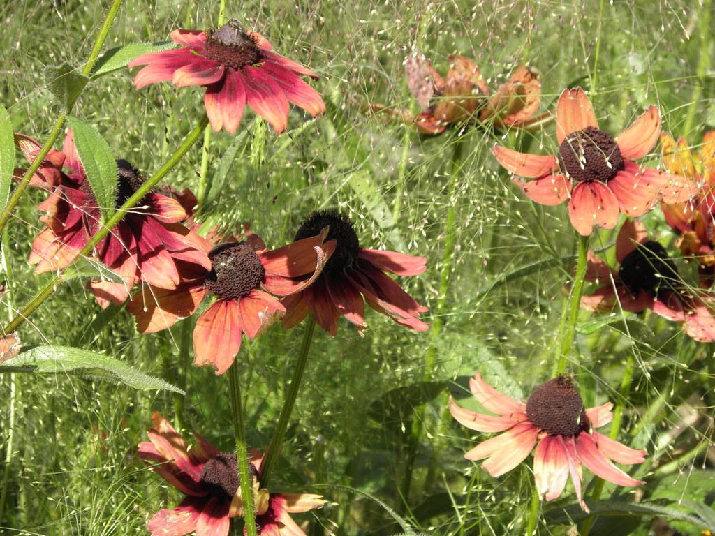 Cut flower garden master gardeners of santa clara county - Master gardeners santa clara county ...