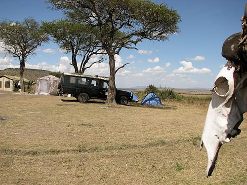 africa kenya ken safari event afrika region masaimaranationalreserve riftvalleyprovince maasaimaranationalreserve oloolologatecamping