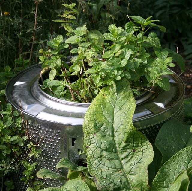 Minty washing machine drum planter