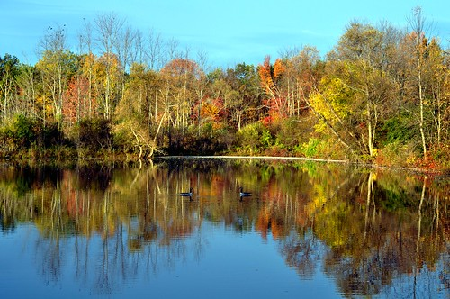 autumn trees lake canada reflection fall water birds geese pond bluesky landsape