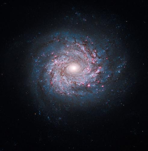 Hubble Sees Pinwheel of Star Birth   by NASA Goddard Photo and Video