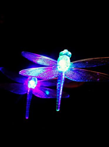 Shine Dragonfly Shine | by Photohunny