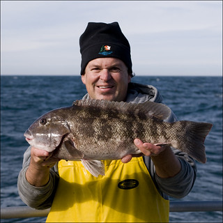 Photo of biologist holding a Tautog