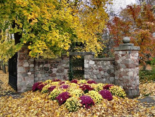 autumn chrysanthemum iroquois mywinners ishflickr frenchandindianwars williampitttheelder blinkagain eriecanalpittsfordnyusa knickerbockerhillpittsfordnyusa stonegatelanepittsfordnyusa pittsfordvtusa southmainstreetpittsfordnyusa hyllgarthpittsfordnyusa eugenesatterbee eugeneminnamon calebhopkins