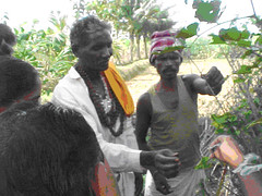 Tue, 20/10/2009 - 15:05 - Yanadi healers showing medicinal plants in the field, Andhra Pradesh, India  More information: biocultural.iied.org