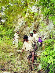Mon, 29/11/2010 - 01:34 - Yanadi traditional healers on the way to the forest to collect medicinal plants, Andhra Pradesh, India  More information: biocultural.iied.org