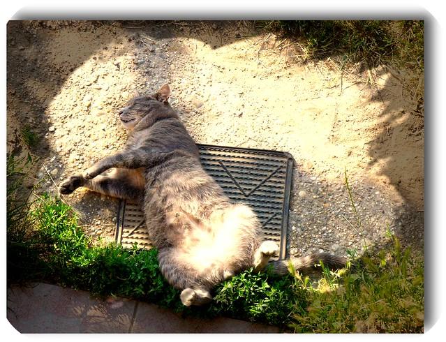 Cat's vacation in the hot- Bazsi vakációzik